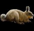 Viscache ##STADE## - mantello 52