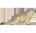 Marmotta ##STADE## - mantello 69