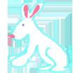 Coniglio comune ##STADE## - mantello 1340000009